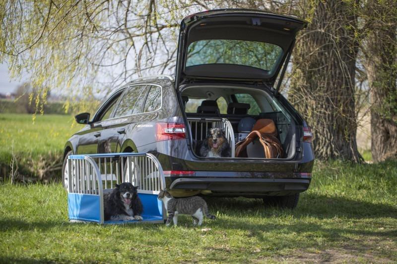 Stimmungsbild mit unic Hundeboxen vor und im Auto mit Hovawarts und Katze