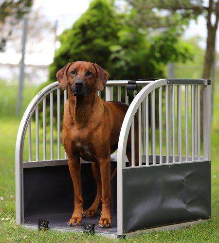 unic L grau mit Labrador