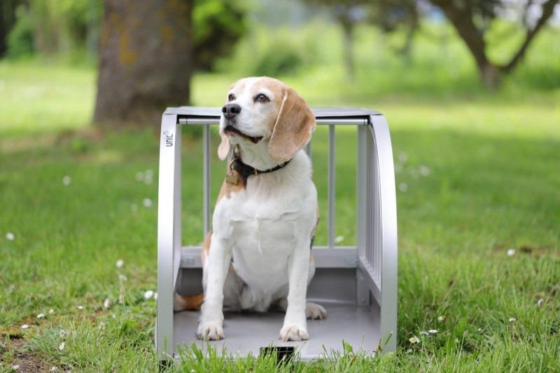 unic S hellgrau mit Beagle
